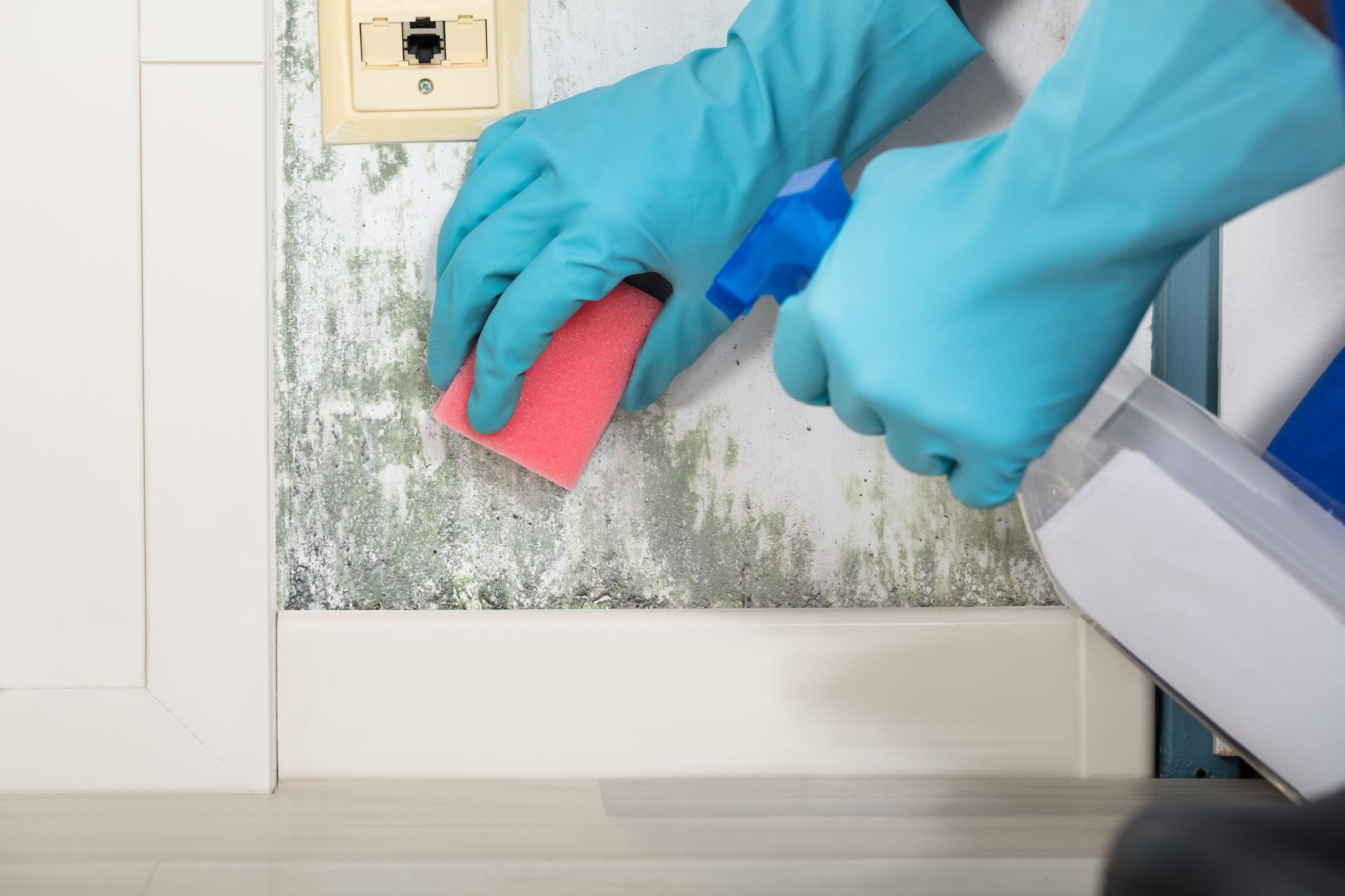 A PROFESSIONAL MOLD REMOVAL SERVICE IS A GOOD INVESTMENT