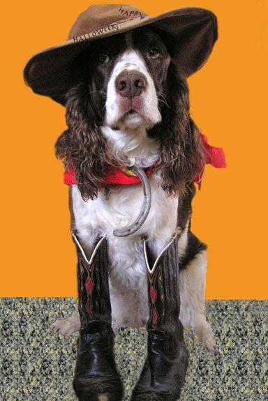 Puplife Dog Blog Puplife Dog Supplies Dog Halloween Pet Halloween Costumes Dog Blog