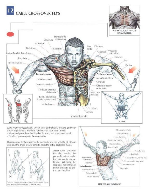 Cruces Pie Poleas Pecho Chest Workouts Anatomy And Workout