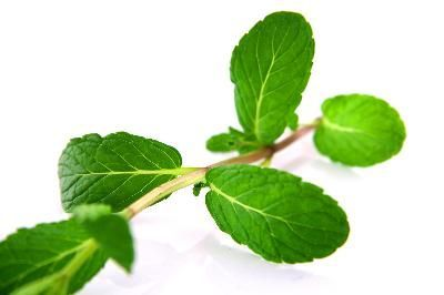 9c0b03b139dd How to Freeze Mint Leaves - I have an over abundance of mint and would love  to use it all winter. Here s how!