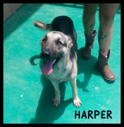 Dogs Available For Adoption Happy Day Humane Society In Big Spring Texas More Than 1 580 Adoptions Since April 24 201 Dog Adoption Adoption