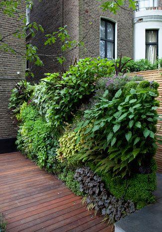 Belsize The Landscape Architect Stadtgarten Garten Pflanzen