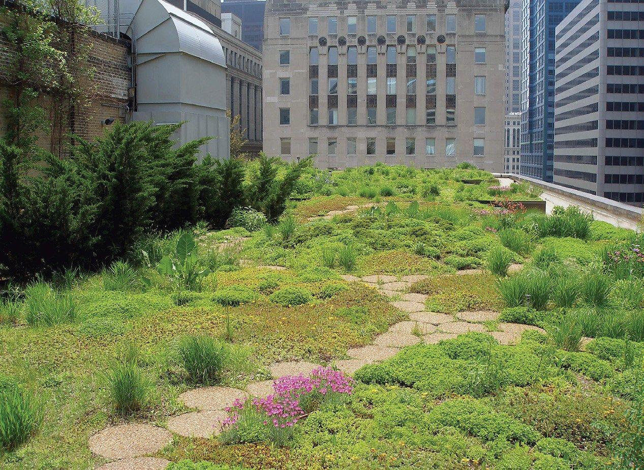 Image Result For Roof Garden Edible Us Rooftop Garden Roof Garden Elevated Gardening