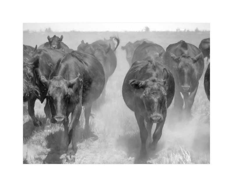 """""""Cattle Drive"""" - Art Print by Jill Corbin in beautiful frame options and a variety of sizes."""