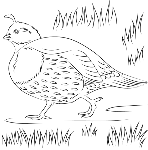 Grab Your Fresh Coloring Pages Quail Download Https Www Gethighit Com Fresh Coloring Pa Hello Kitty Colouring Pages Coloring Pages Printable Coloring Pages