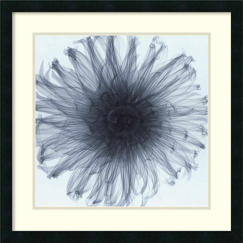 'Dahlia (Blue)' by Steven N. Meyers Framed Photographic Print