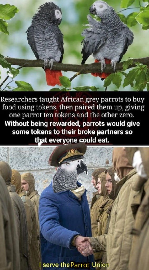 Good Birb Funny Memes Happy Funny Animal Memes Funny Memes Funny Pictures