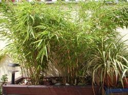bambus-garten | ideen für den hundegarten | pinterest | garten, Best garten ideen