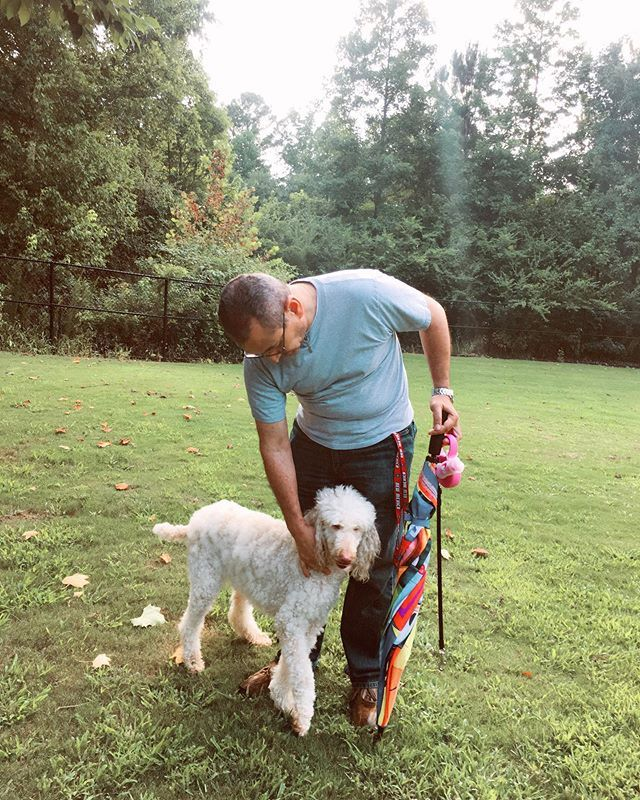 Look whos exhausted after her first dog park visit. #georgiatheservicedog #rescuepoodle #poodlesofinstagram #whitepoodle #adoptdontshop
