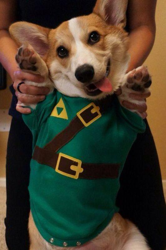 Off to Save Princess Zelda | Pinterest | Princess zelda ... | 533 x 800 jpeg 46kB