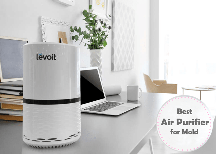 Best Air Purifier for Mold, Fungus, Mildew