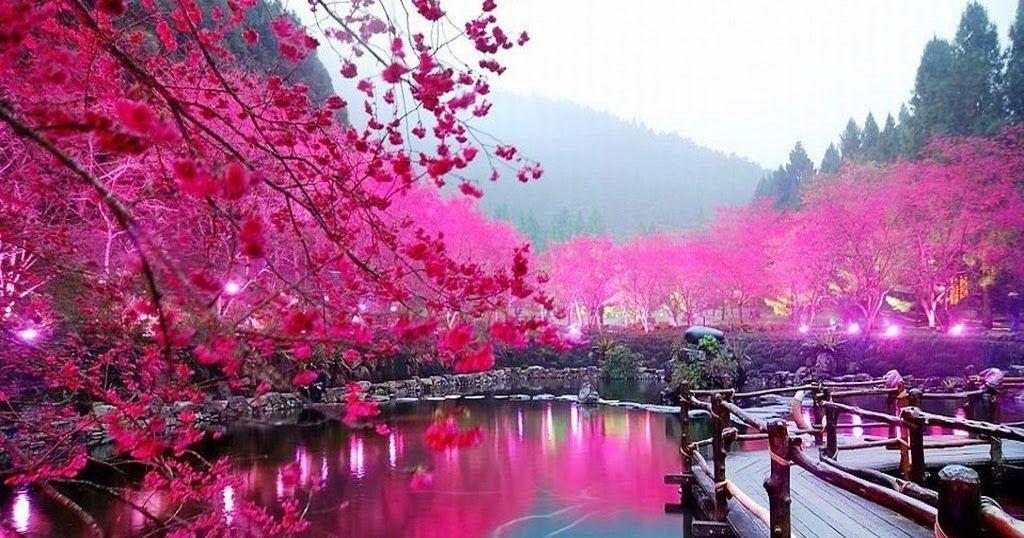 Paling Keren 17 Wallpaper Bunga Yg Cantik Wallpaper Hp Yg Cantik Hd Wallpaper Gambar Wallpaper Bunga Cantik Indah C Di 2020 Bunga Sakura Pemandangan Wallpaper Bunga