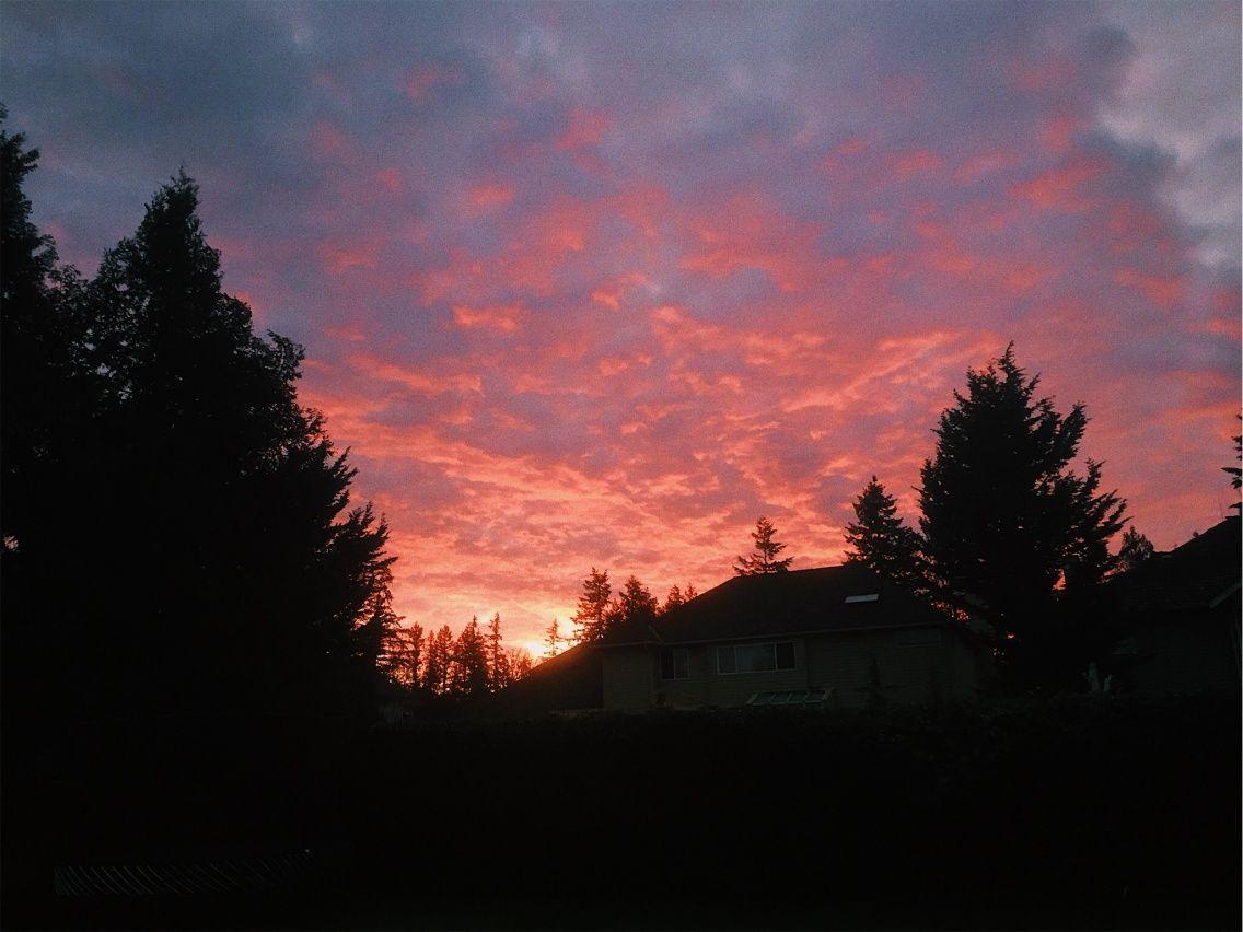 Vsco Pink Sunset Sunset Sun Night Evening Sky Clouds Trees Nature Scenery Pink Kellyshamon Beautiful Sky Pink Sunset Sunset Pink sky sunset sun trees nature
