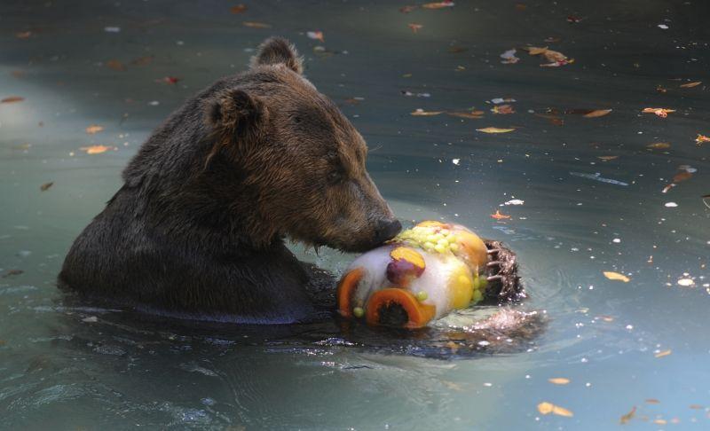 Gelados para os animais do Zoológico, no Brasil