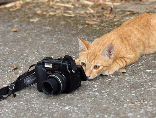 lol !!!!!!!!! : un nouveau venu dans le monde de la photo !!!!!! lol !!!!!!!!! | michelmarc21000