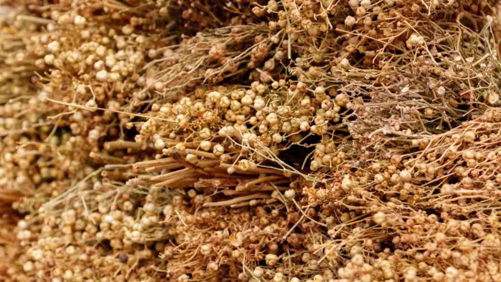فوائد الحرمل للحمل How To Dry Basil Herbs Dried