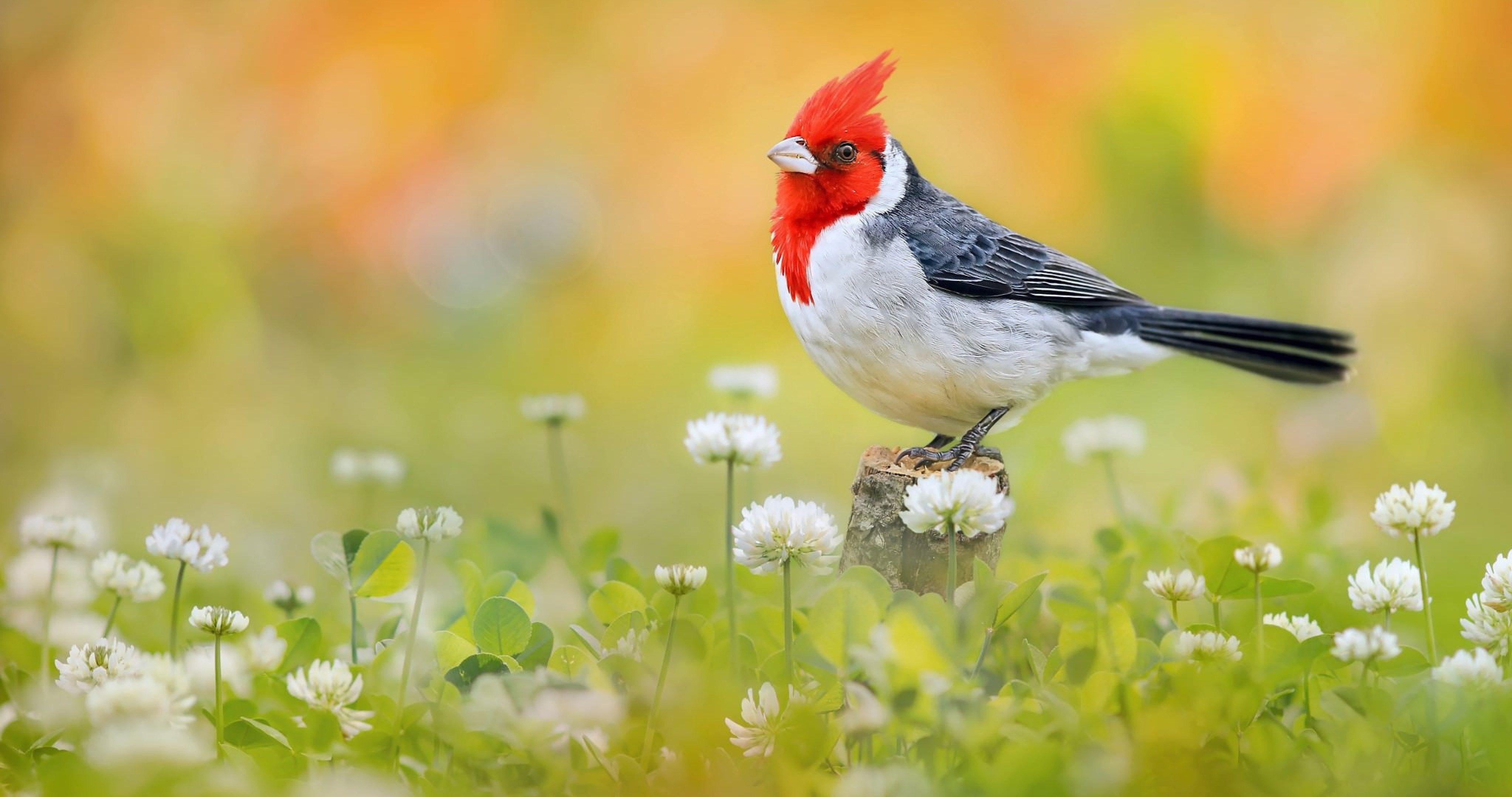 Birds Picture Hd Wallpapers Backgrounds Of Your Choice Beautiful Bird Wallpaper Parrot Wallpaper Bird Wallpaper