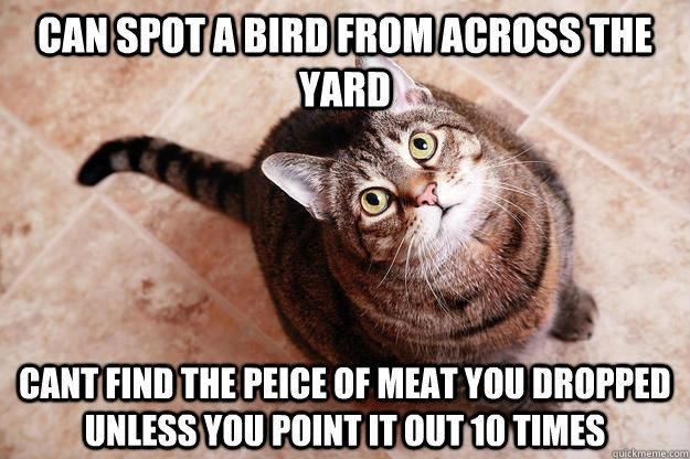The Best Of Internet Memes In 2020 Stupid Cat Funny Cats Funny Animals