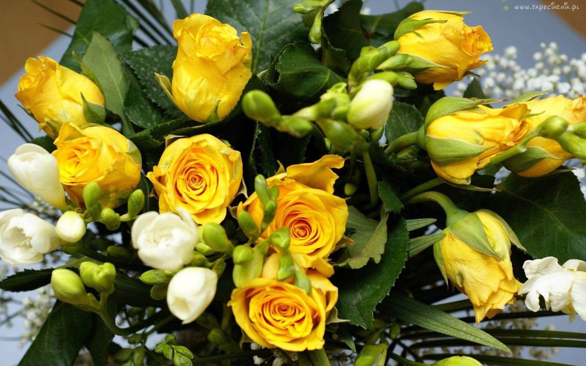 Zolterozebialefrezjeg roses pinterest