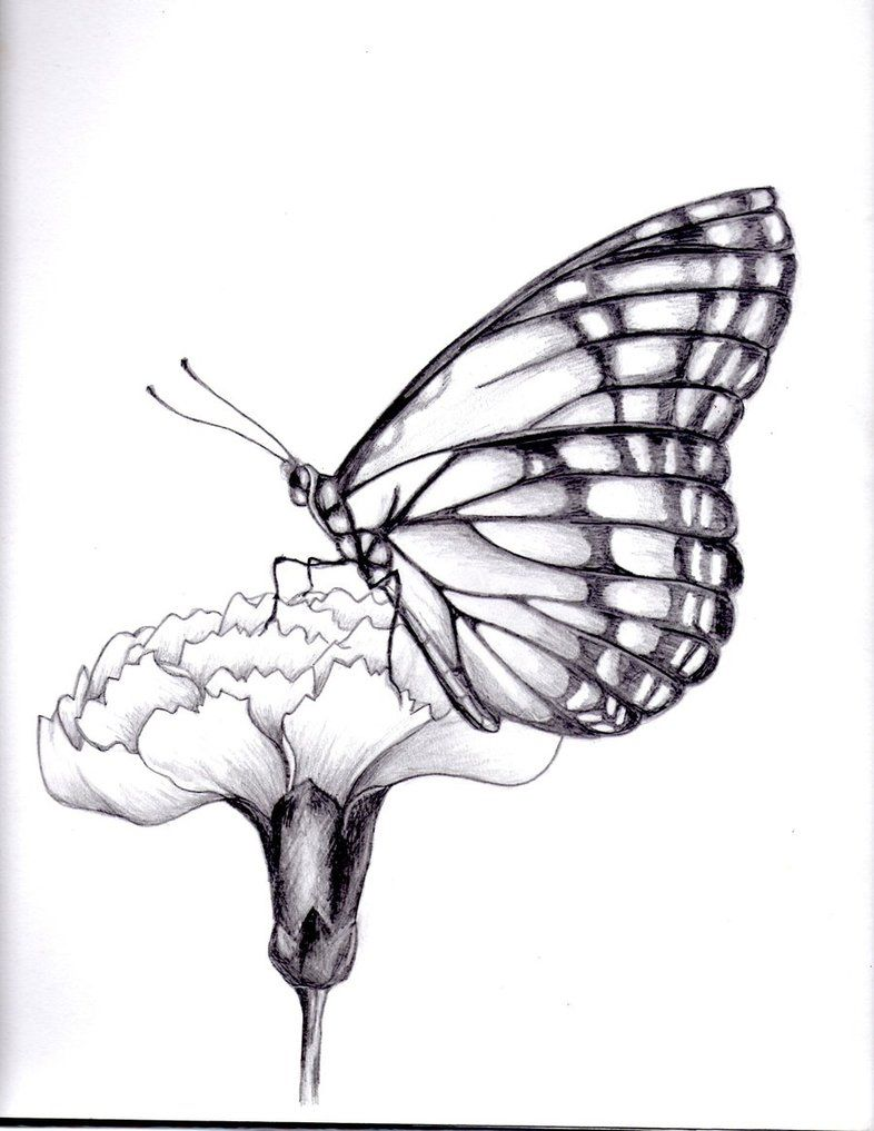 Drawings Of Flowers And Butterflies  My Drawing Of A Butterfly By  ~kittycat727 On