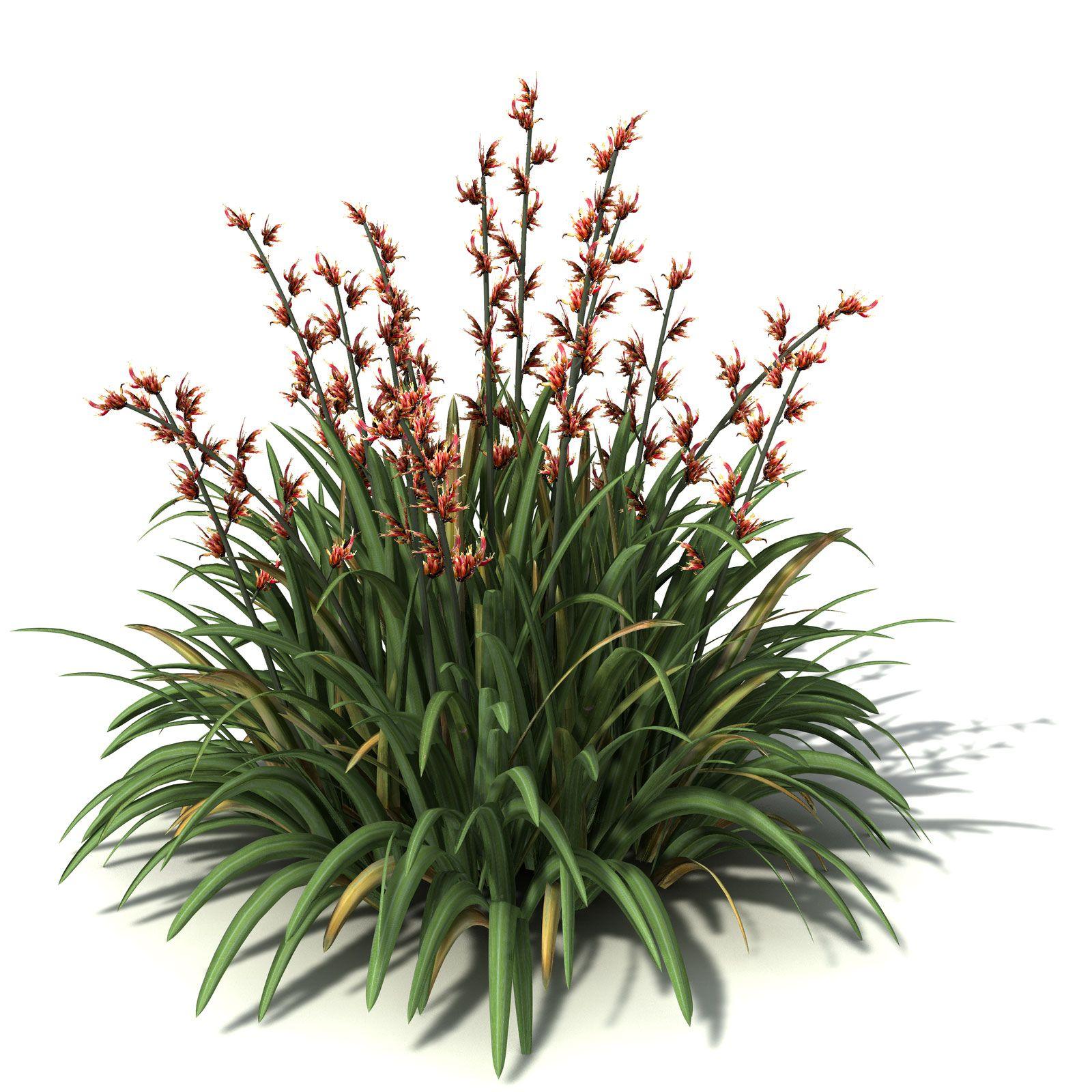 New Zealand Flax 2d Beautiful Flowers Wallpapers Tree Plan Png Garden Illustration
