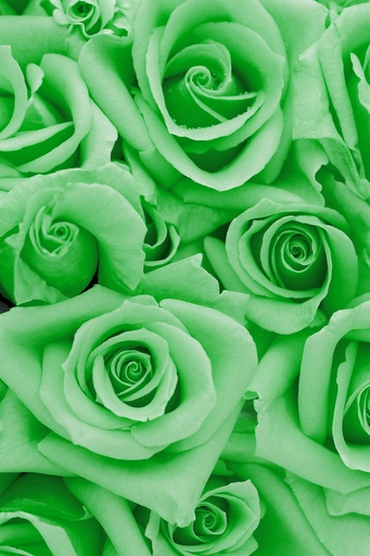V Que Necesita De Amor Del Bueno Del Verdadero Del Honesto E Incondicional Qu Flower Background Iphone Flowers Photography Wallpaper Wallpaper Iphone Roses
