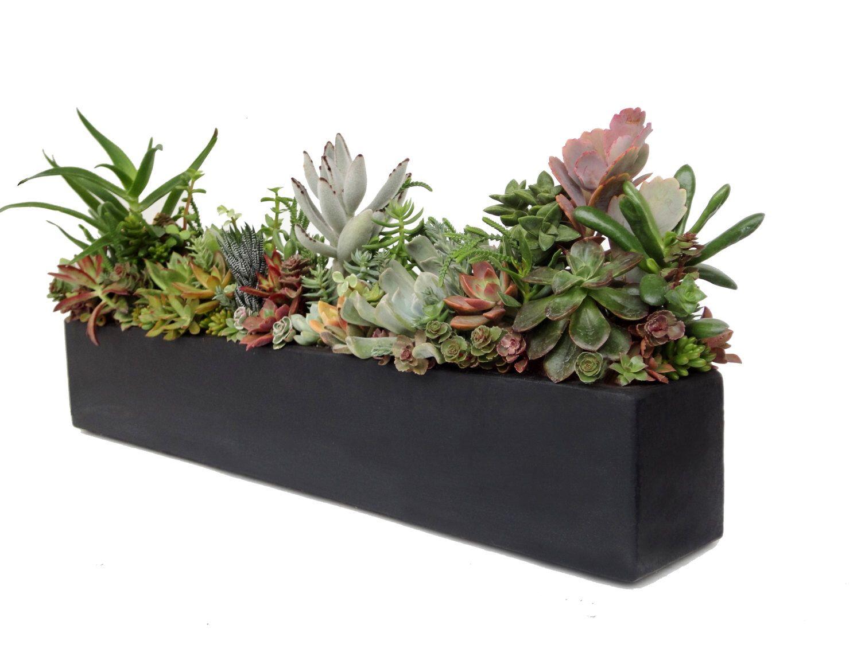 Succulent Arrangement Concrete Centerpiece 24 Black 400 x 300