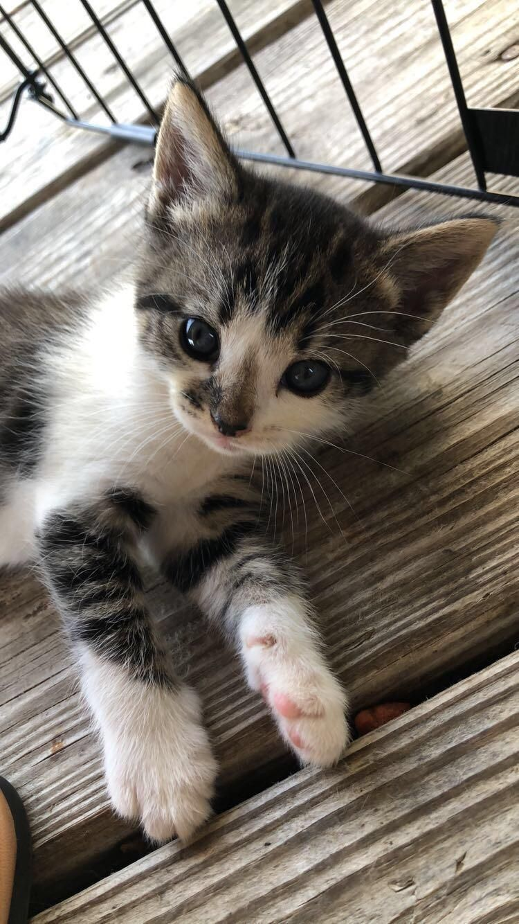 Baby Kitty Kittens Cutest Cute Cats Baby Cats