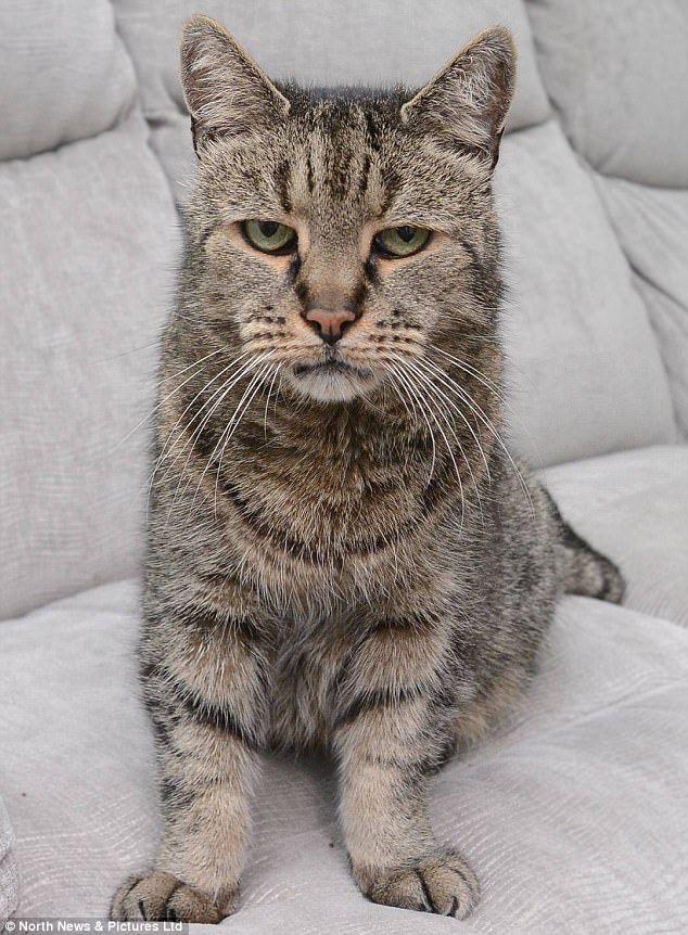 Die älteste Katze Der Welt