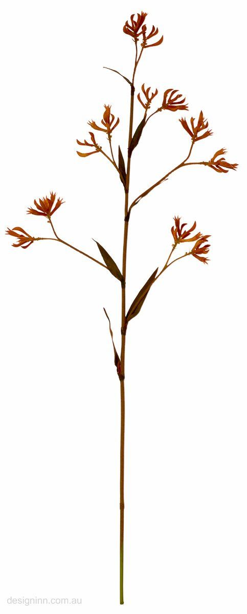 Floral Stems