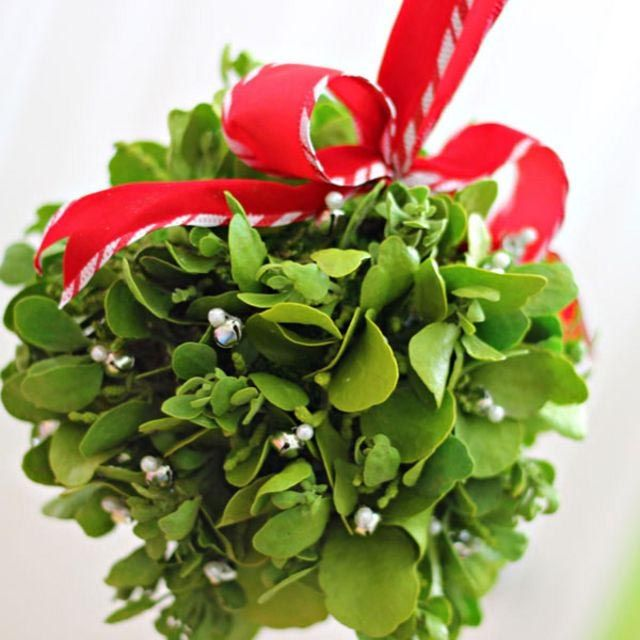 Mistletoe Ball Decoration Enchanting Mistletoe Kissing Balls Are A Lot Of Fun To Have Around During The Inspiration