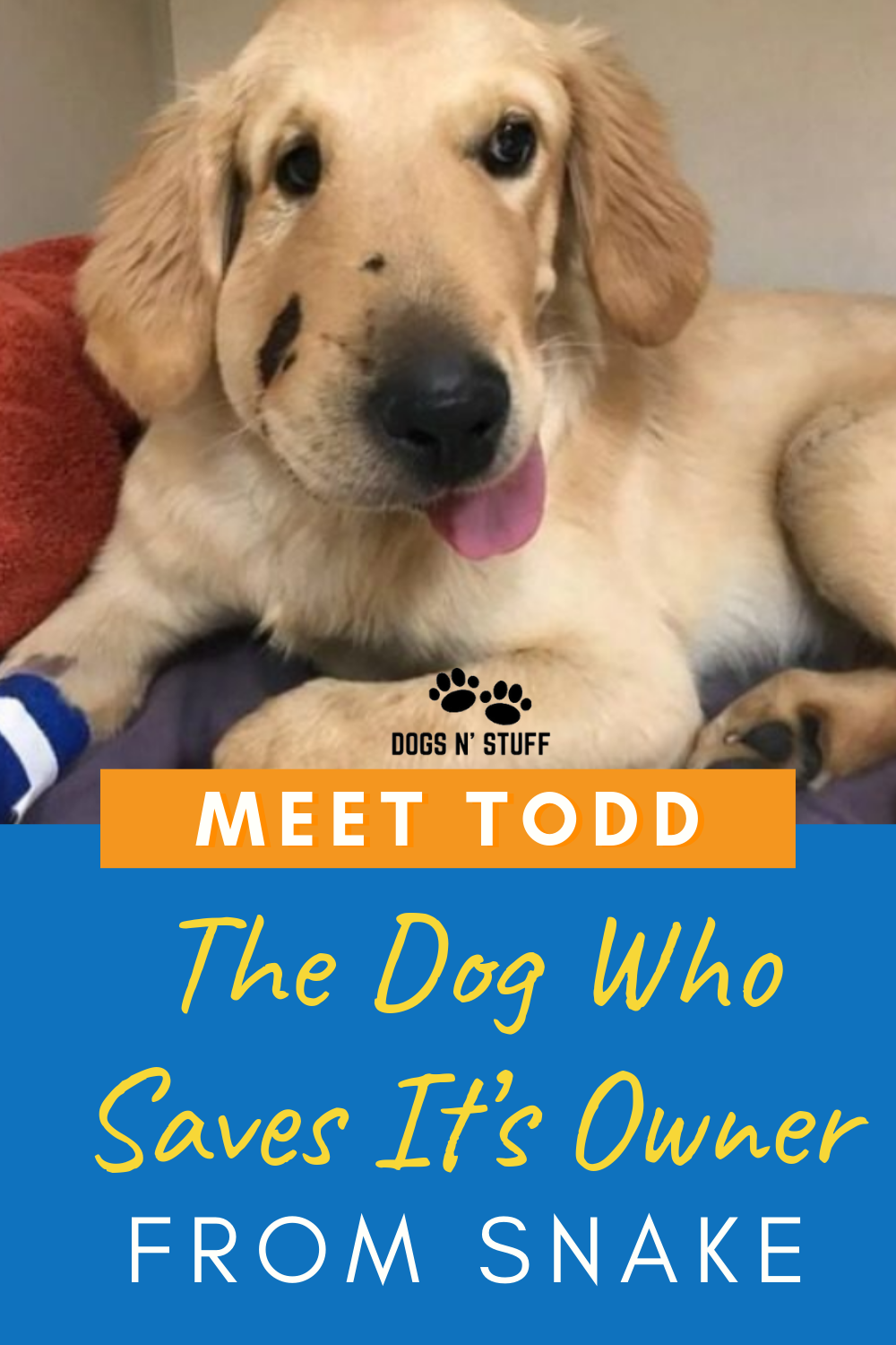 Meet Todd The Dog Who Saves It's Owner From Snake Dog