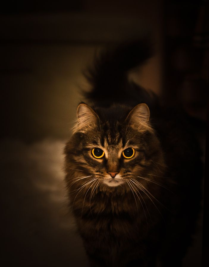 """""""He lives in the half lights in secret places, free and alone--this little-great being whom his mistress calls, 'My Cat.'"""" --Margaret Benson"""