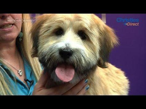 Grooming Guide Tibetan Terrier Puppy Trim Pro Groomer