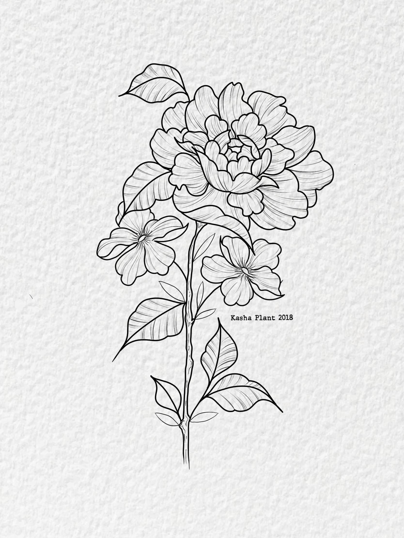 Peony Design By Kash Plant Baby Tattoos Petunia Flower Black Tattoos