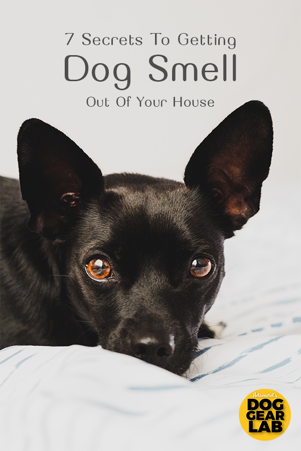 7 Secrets To Getting Dog Smell Out Of Your House Is is starting to smell like dog on your sheets Here are seven secrets on how to get rid of dog odor out of your house