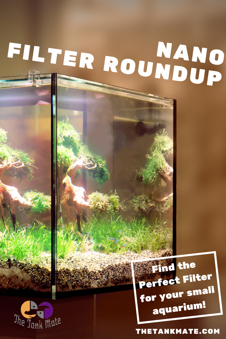 We Round Up The Best Filter Options For Your Small Fish Tank Whether You Have A 3gallon Fish Tank A 5gallon Aquarium Or Small Fish Tanks Fish Tank Aquarium