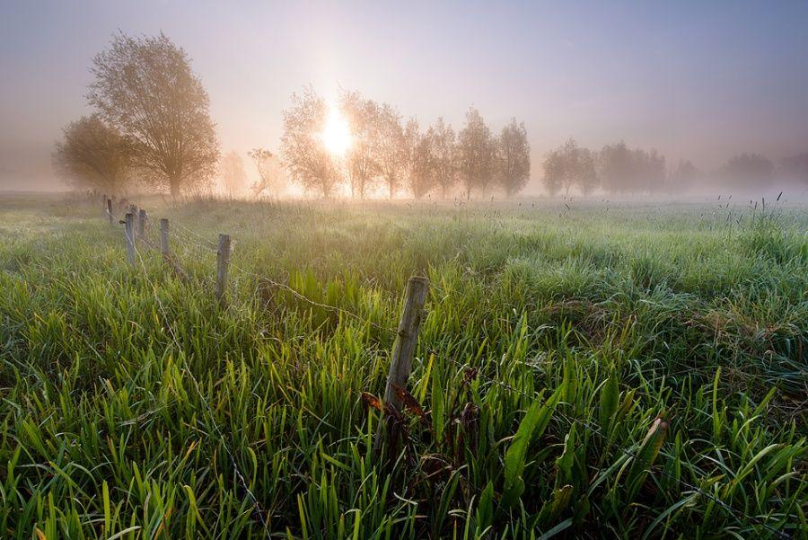 Kalkense meersen at dawn - Schellebelle, Belgium
