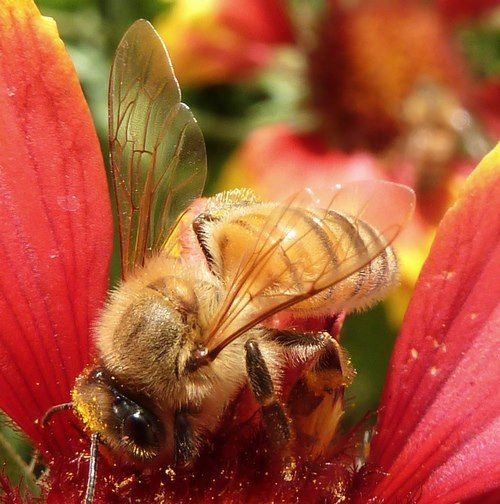 Pin By Bee On My Humble Abode: Pin On Bees