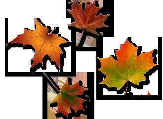 Risultati immagini per leaves heart autumn png