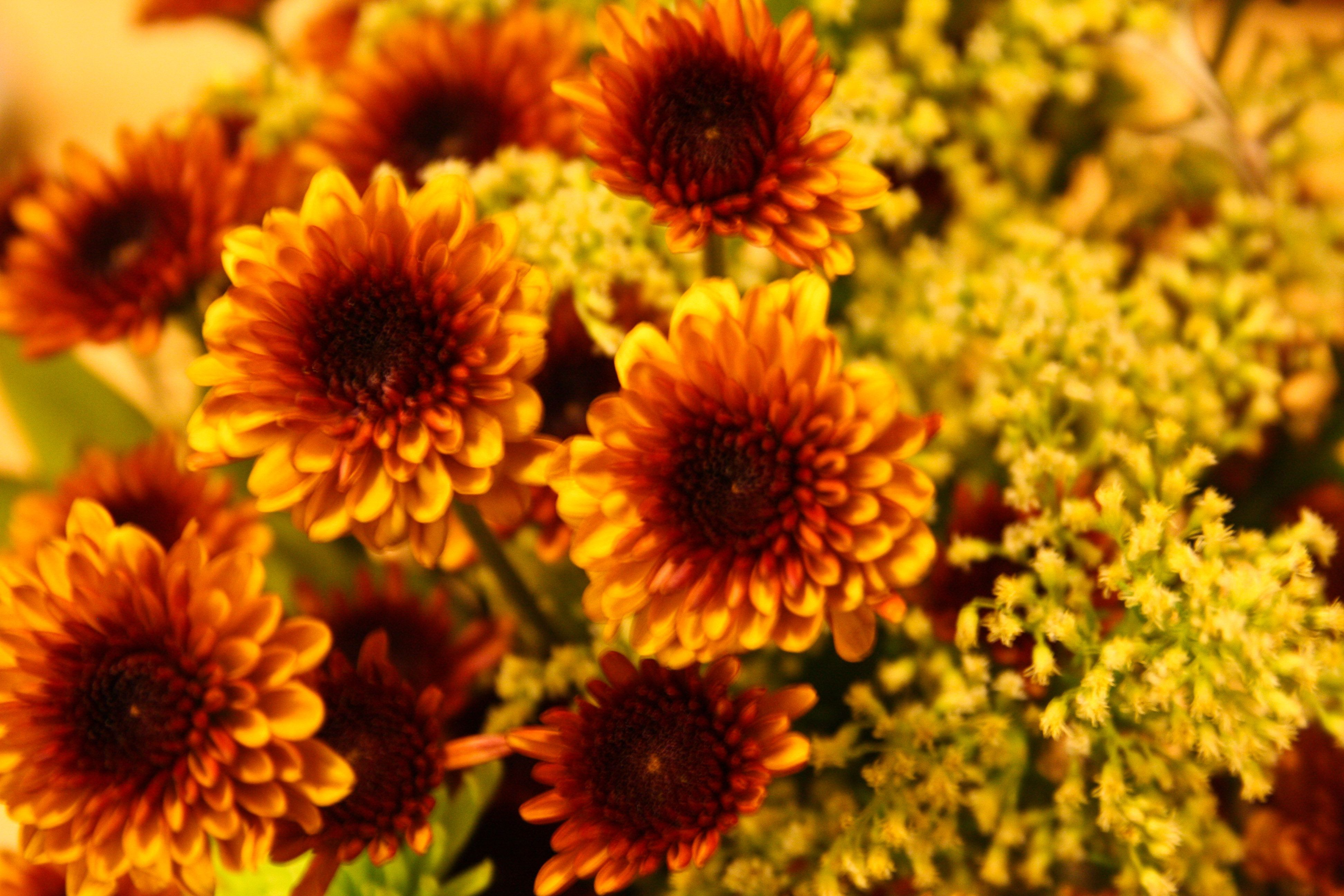 Flower fall flowers pinterest flowers hd flower wallpaper and images of fall flowers izmirmasajfo Image collections