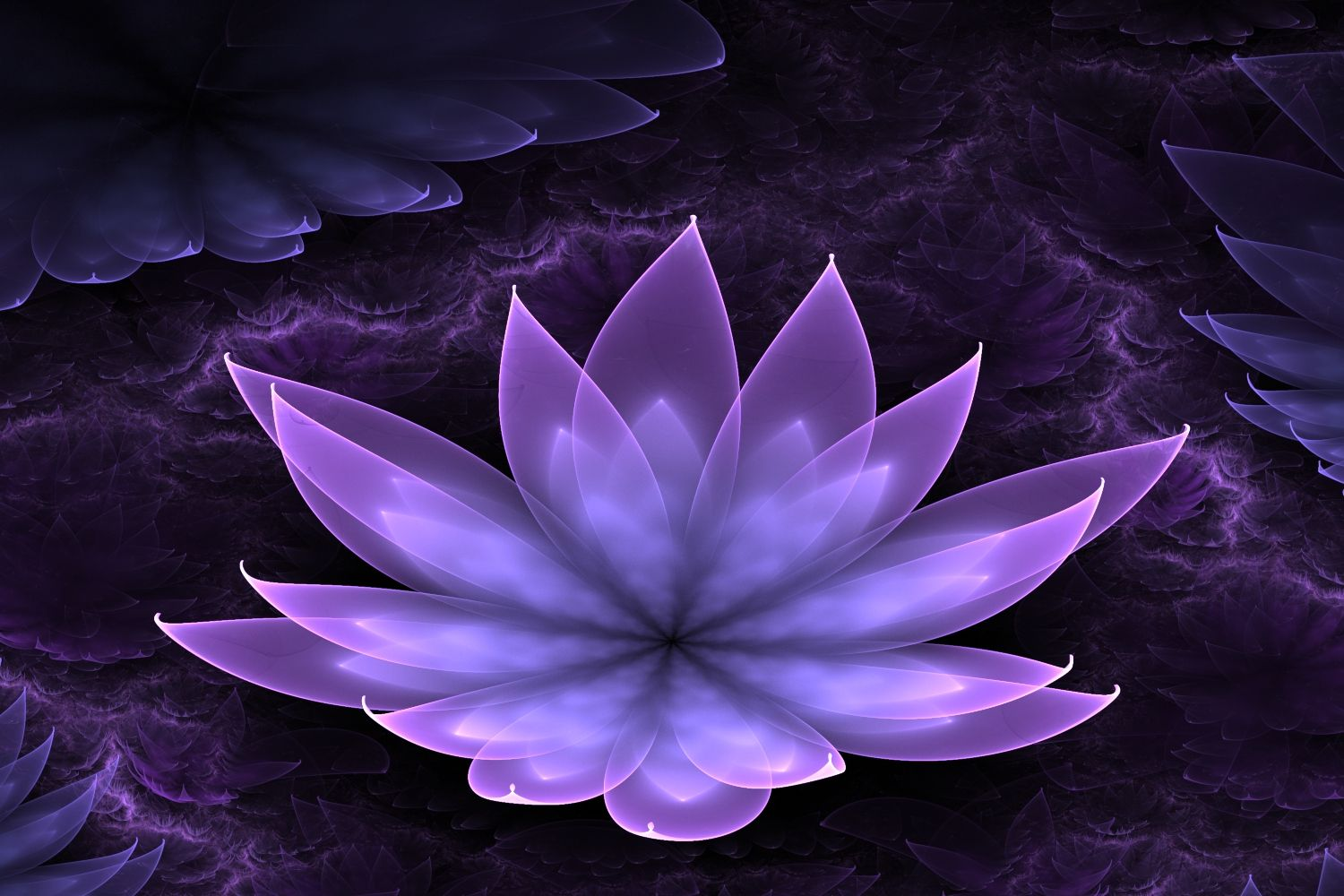Flower Purple Lotus Wallpapers Photo