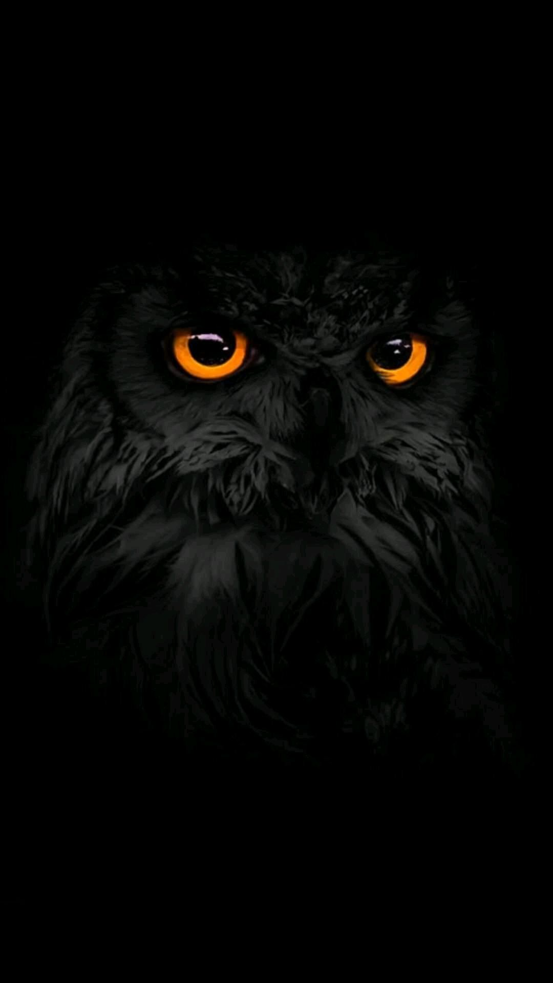 Colorful Owl Iphone Background In 2020 Owl Wallpaper Owl Wallpaper Iphone Owl Pictures