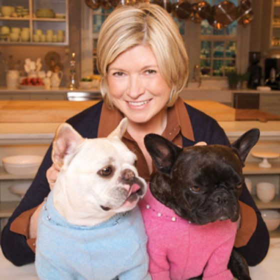 Martha S Frenchies Follow Us Www Facebook Com Theclassydog And Www