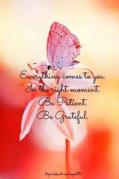 Tout vient à vous au bon moment. Soyez patient, soyez reconnaissant !