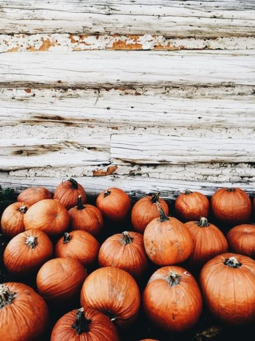 Queen Of The Pumpkin Patch Fall Wallpaper Fall Background Autumn Aesthetic