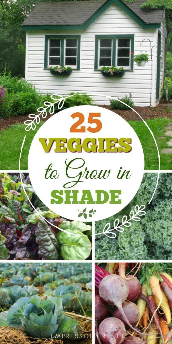 25 Vegetables You Can Grow In Shade Growing Vegetables 400 x 300