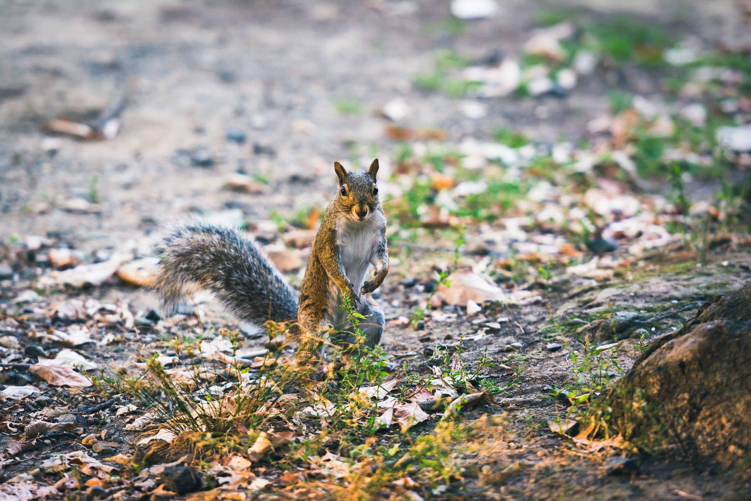 Squirrel In North Hudson Park Hudson park, Park