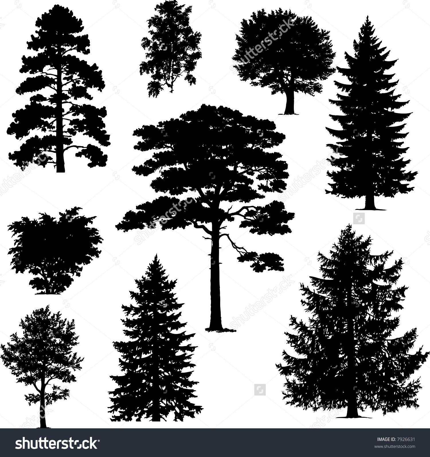Pine Trees Stock Vectors & Vector Clip Art Shutterstock