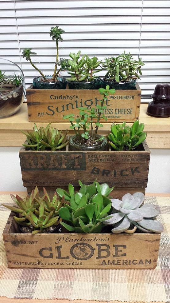 Vintage Cheese Box Succulent Planters Succulent 400 x 300